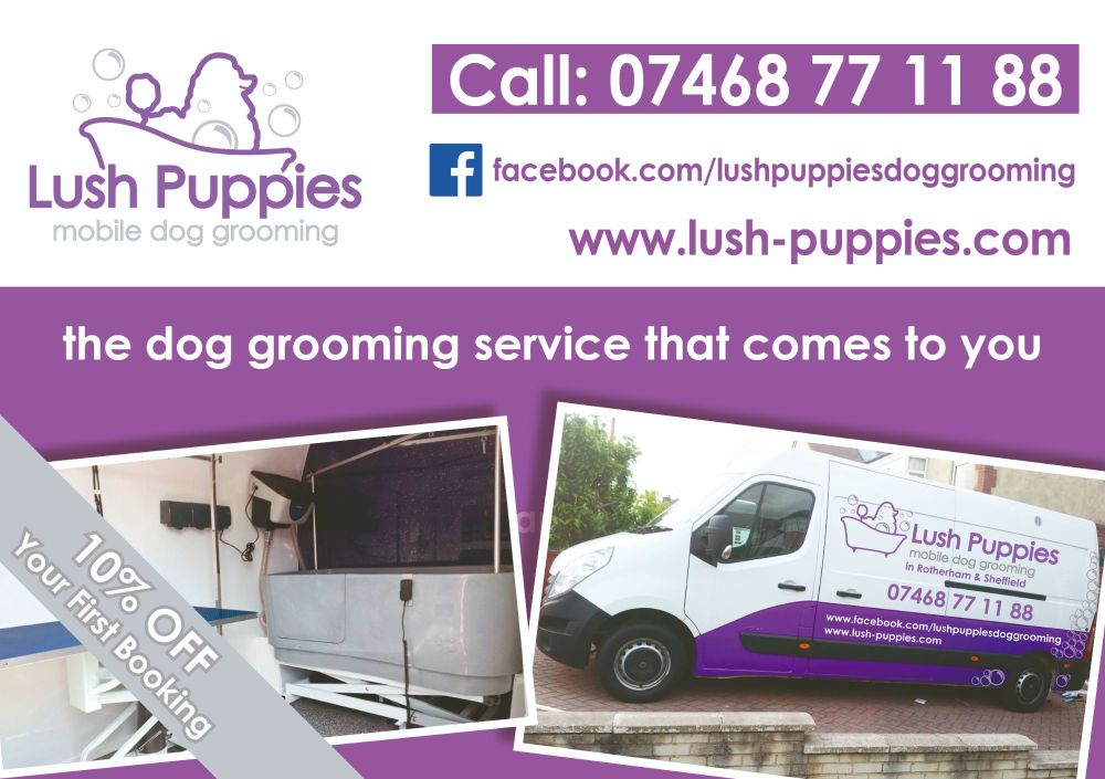 Dog Grooming Flyer Design & 500 Printed