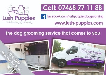 Dog Grooming Flyer Design & 5000 Printed