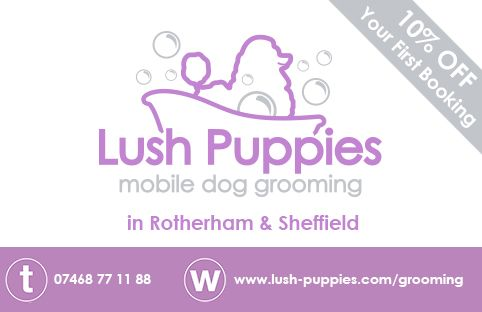 Dog Grooming Marketing Stationary