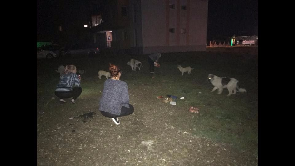 Volunteers are interacting with street dogs at night.
