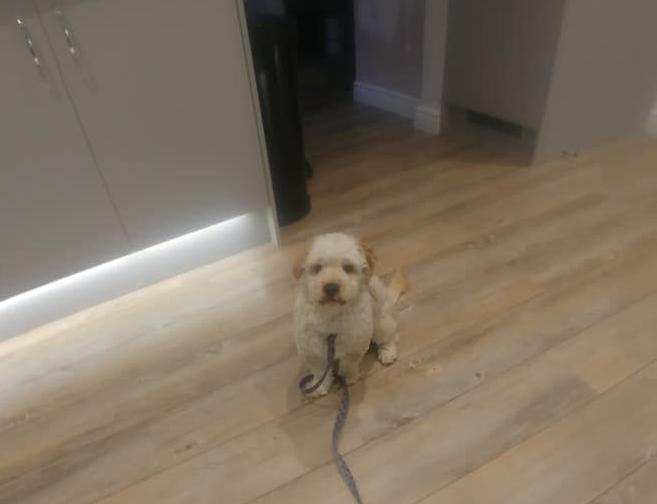 Beny adopt