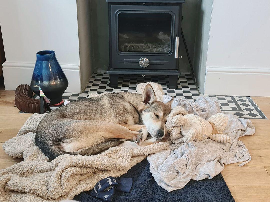 Lulu adopt
