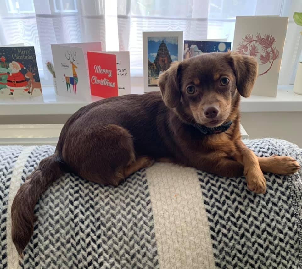 Rita adopted.jpg