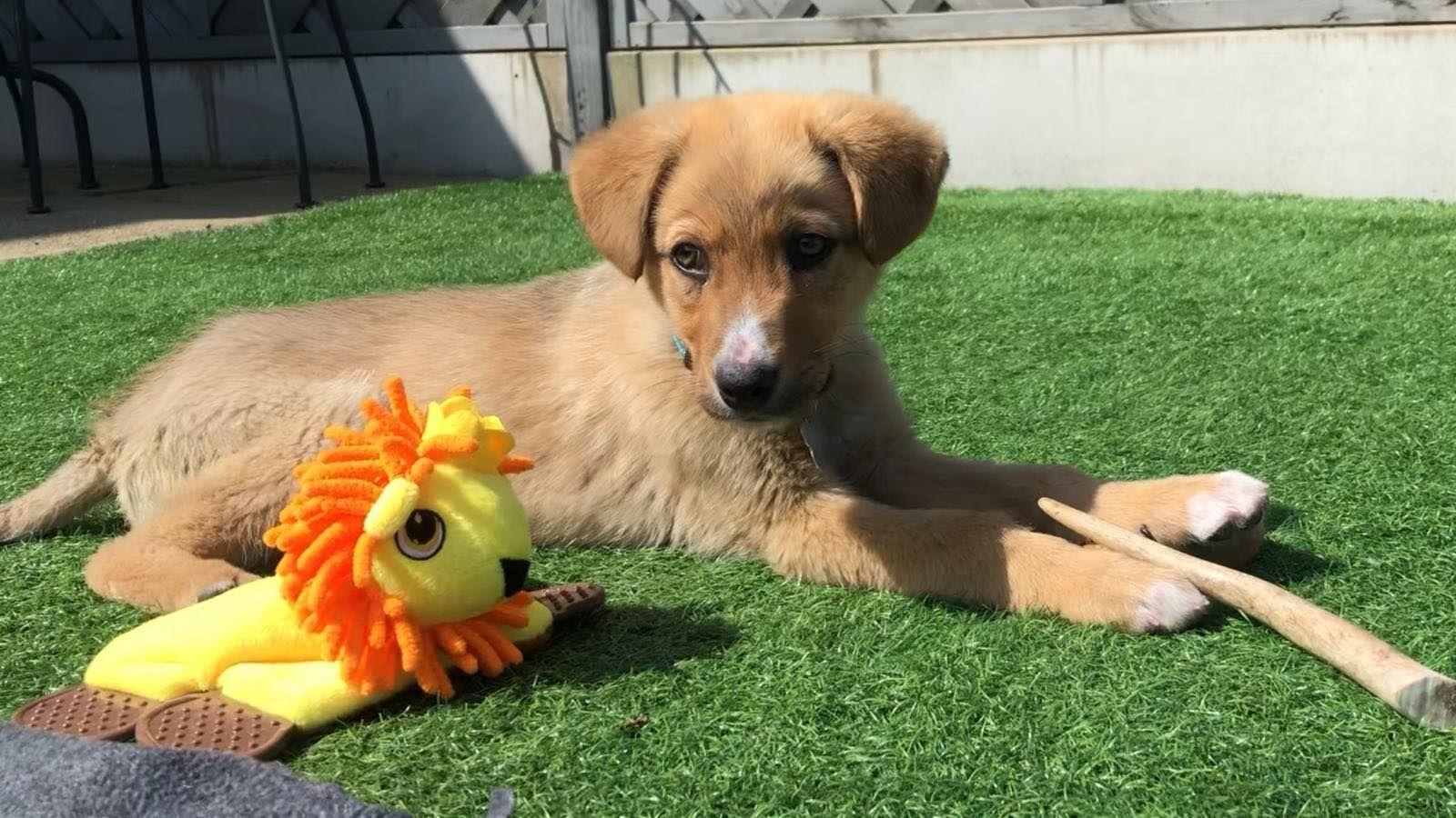 Alfie Puppy 11