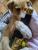 Puppy 9 Wanda F.png