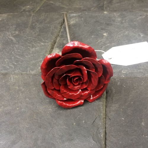Full bloom dark red rose
