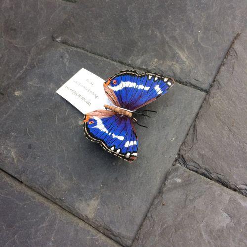 Painted steel purple emperor butterfly