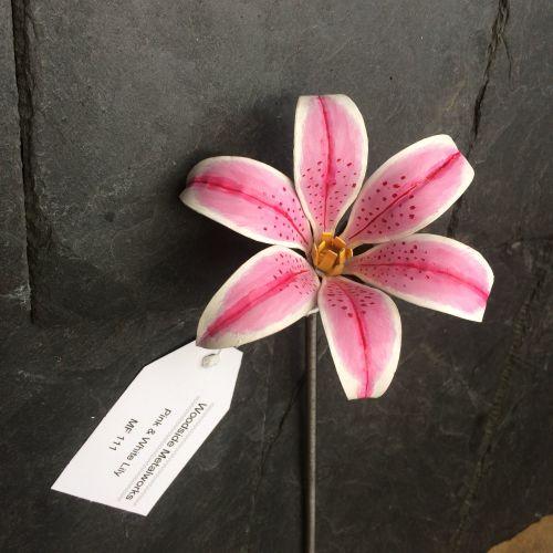 Steel stargazer lily flower in pink and white mightylinksfo