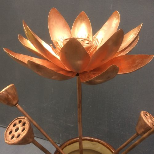 Lotus seed pods and flower