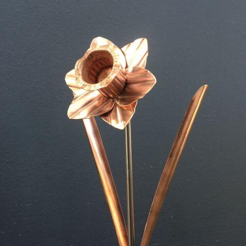 Copper Daffodil