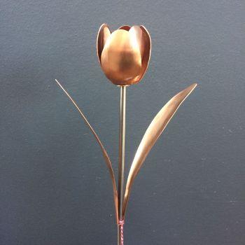 Copper tulip