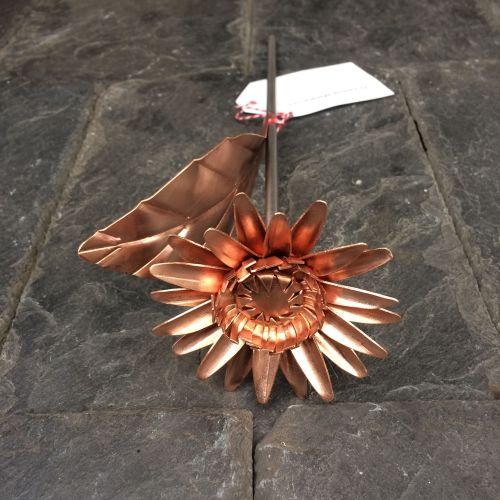 Copper daisy