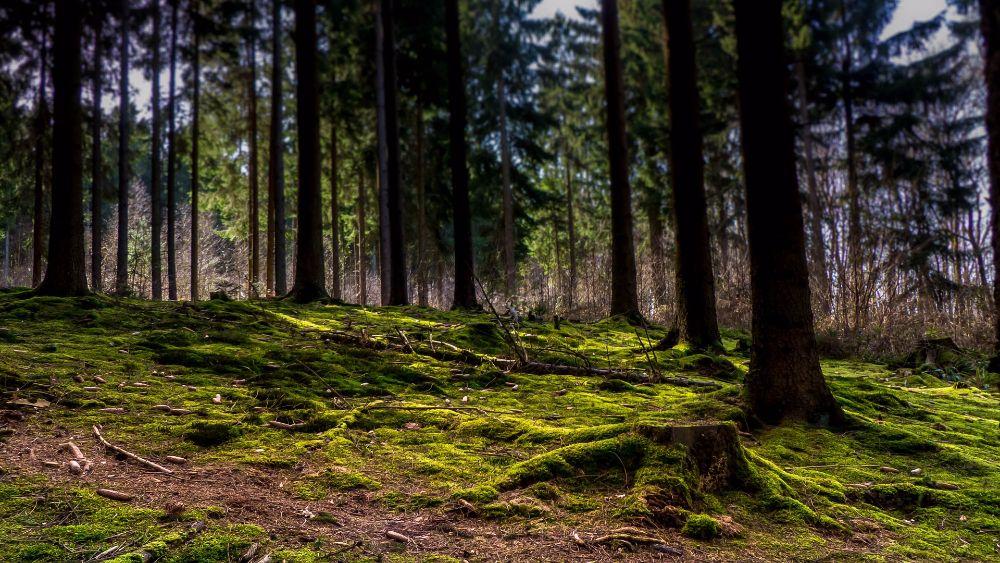 Moss essences