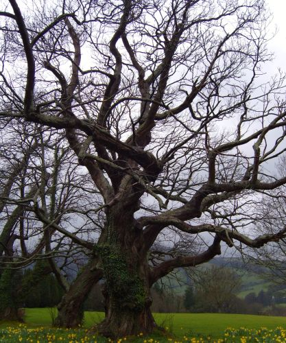 Sweet Chestnut Tree Moss: Life reclaiming