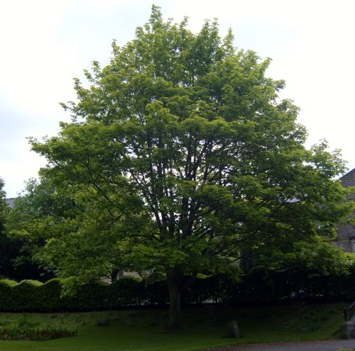 Sycamore Tree Moss: Helps us prioritise