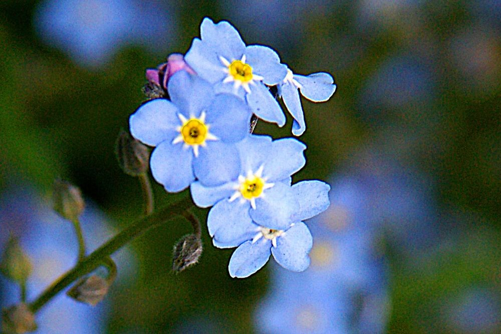 Forget-me-not: Feeling Invisible