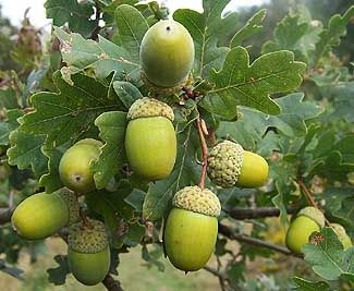 Acorn: Giving and receiving