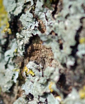 Leafy Lichen: Peaceful co-existence