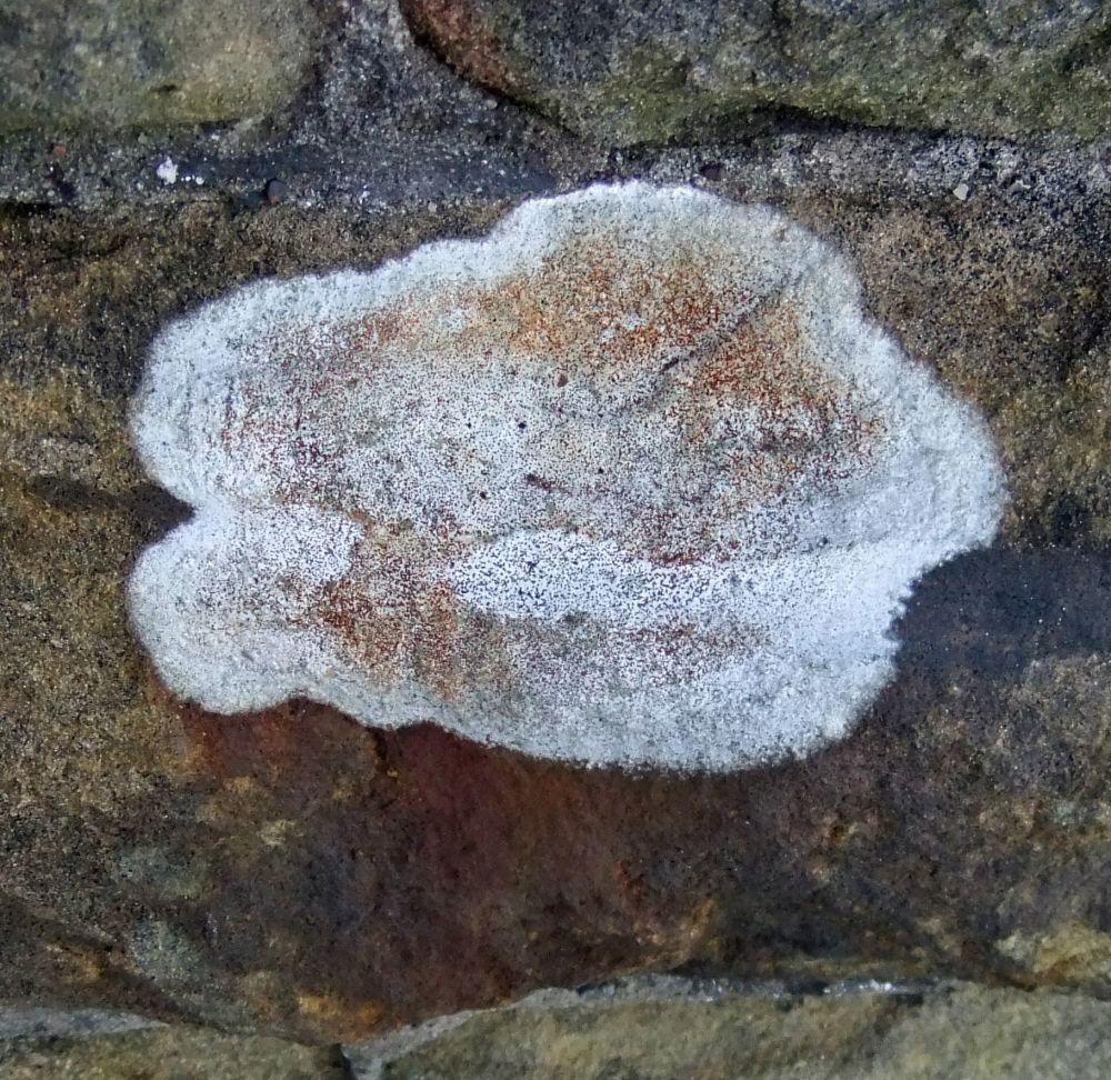 Rock Lichen: Dependency