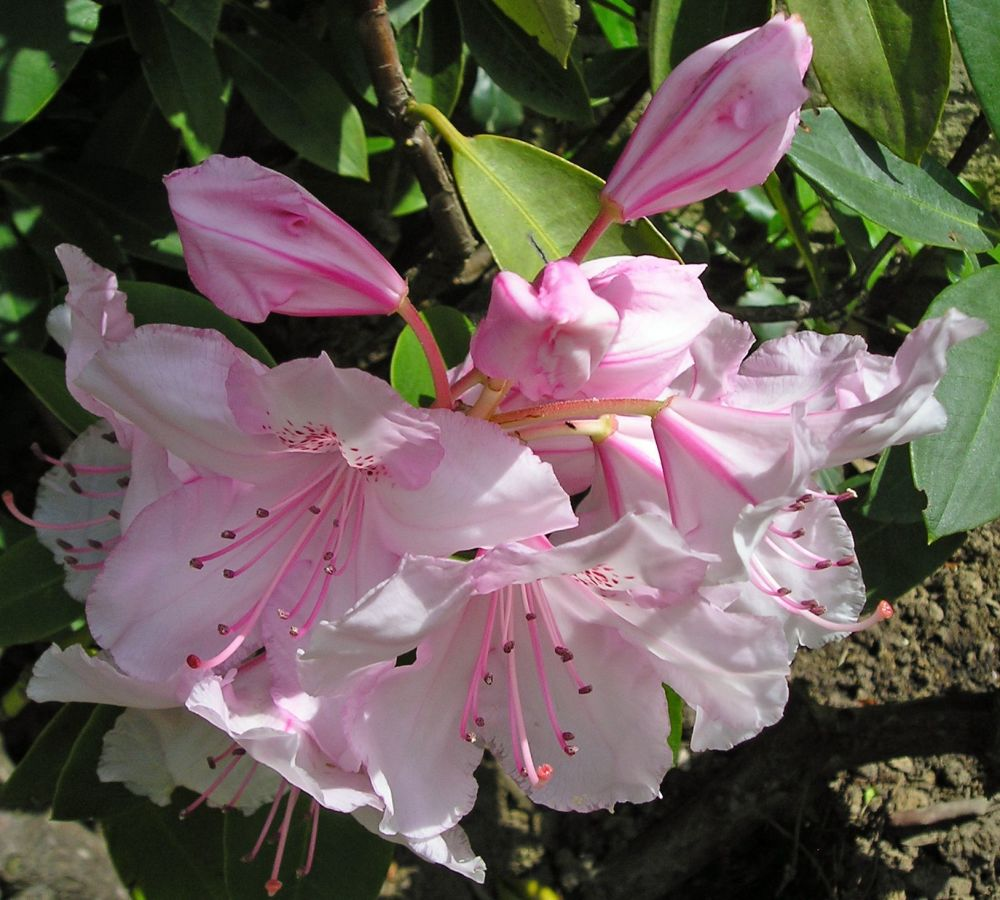 Wild Rhododendron: Flourishing relationships