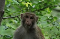 Monkey Business Wax pot