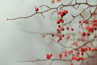 Dewberry Wax pot