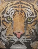 Tabby Tiger