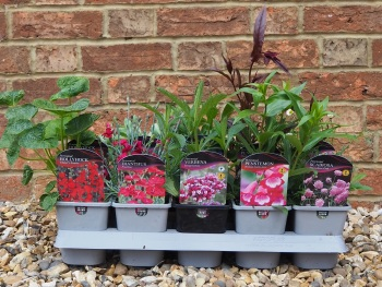 Selection 10 Perennial Plants in a Tray