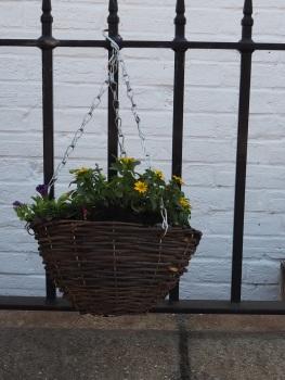 Planted Hanging Basket