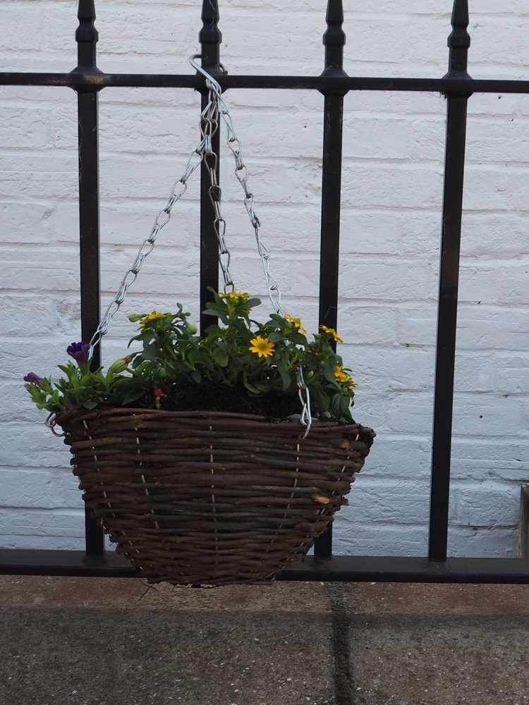 Planted Hanging Basket