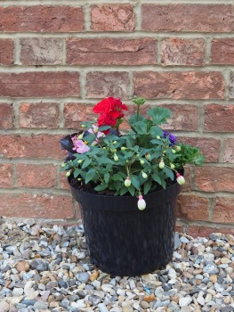 Planted Summer Patio Pot Small