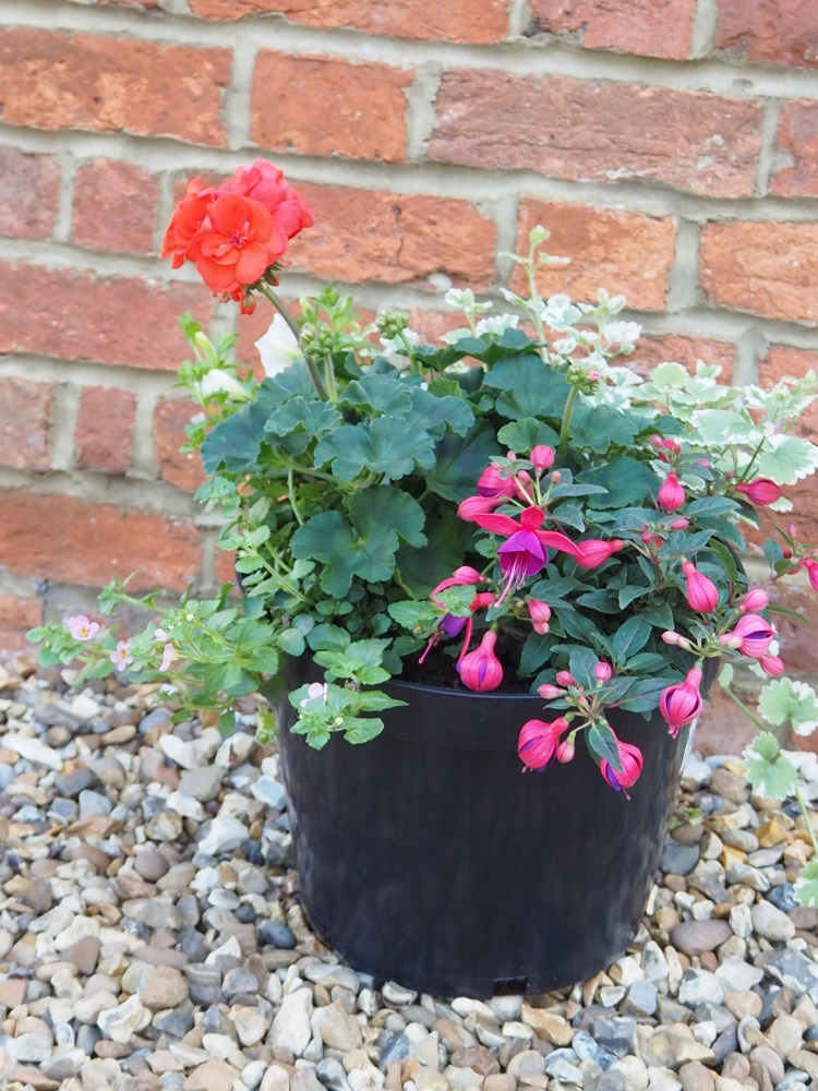 Summer Patio Pot Large