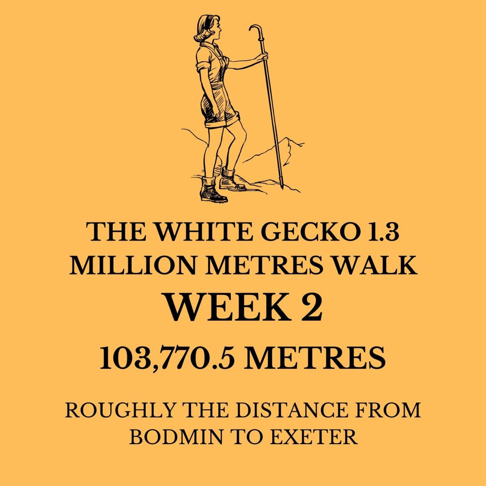 THE WHITE GECKO 1.3 MILLION METRES WALK WK 2