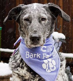 Join us for Bark for Life