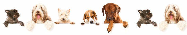 Bark for Life Fundraising Tips
