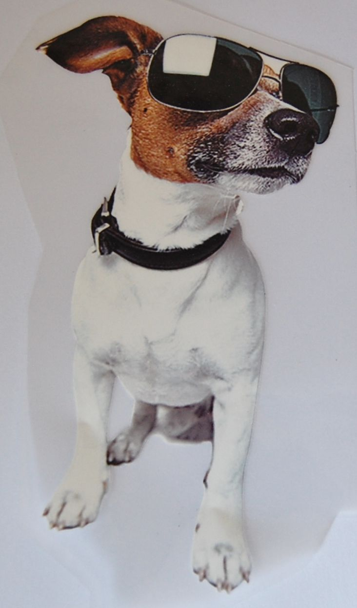 IRON ON HEAT TRANSFER, JACK RUSSEL DOG IN SHADES, 12CMS x 21CMS. IDEAL FOR