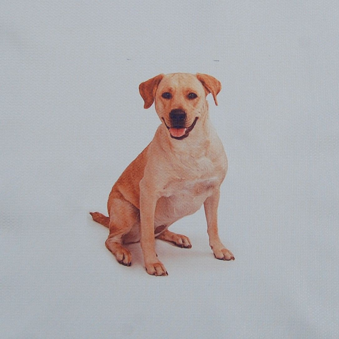 18 INCH CUSHION PANEL WITH LABRADOR DOG ON A PALE CREAM FURNISHING FABRIC.