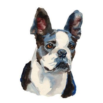 8 INCH FELT SQUARE,  BOSTON TERRIER.