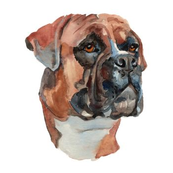 8 INCH COTTON SQUARE,  BOXER DOG.