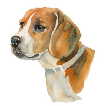 8 INCH COTTON SQUARE,  BEAGLE.