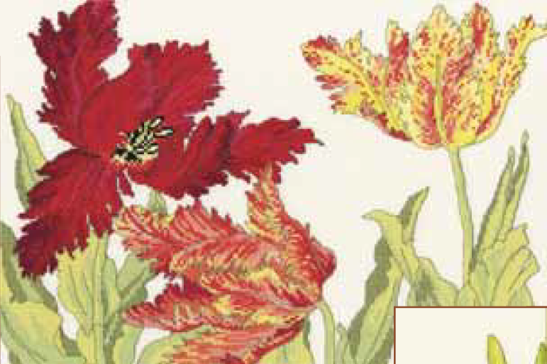 Bothy threads XBD09 embroidery counted cross stitch range - Tulip blooms