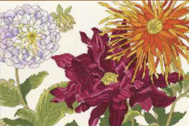 Bothy threads XBD11 embroidery counted cross stitch range - Dahlia blooms