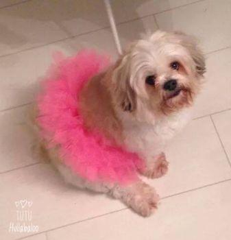Doggy Tutu Pink