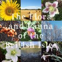 1. Flora and Fauna Yarn Club 2021 - Months 1-3
