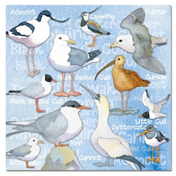 Seabirds card