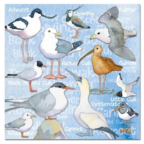 Seabirds card