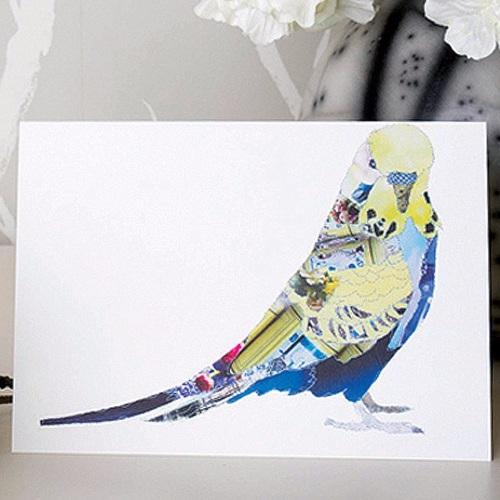 Budgie blank card by Catherine Kleeli