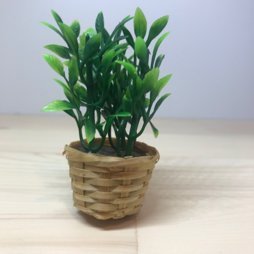 Wicker Basket Plant