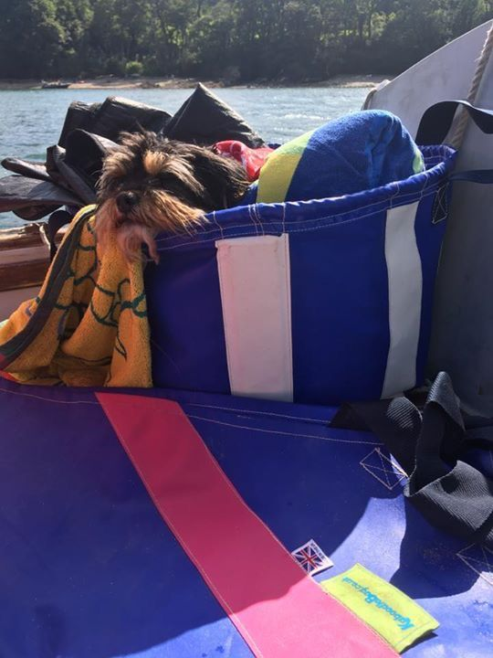 Too much fun sailing wore this puppy out!