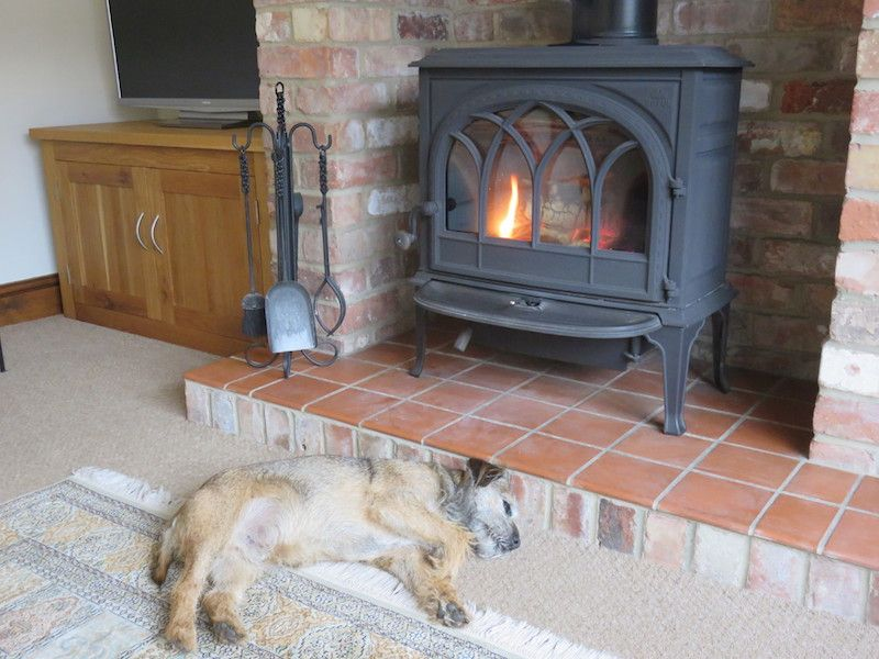 Hovis the border terrier at fox cottage